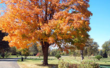 Fall image of a tree on the Cedar Memorial grounds